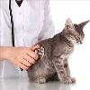 Ветеринарные клиники в Моргаушах
